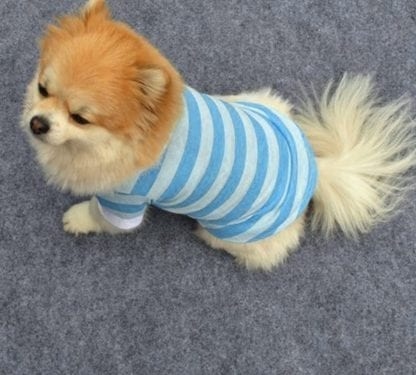 Dog's Little Sailor Striped T-Shirt 2