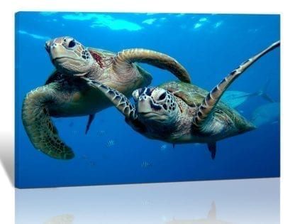 Canvas Print Painting Two Sea Turtles Under Sea Picture 1